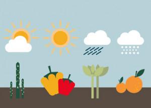 Saisonkalender Gemüse: rund ums Jahr Abwechslung