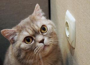 10 Katzentypen und ihr Einfluss auf den Stromverbrauch.