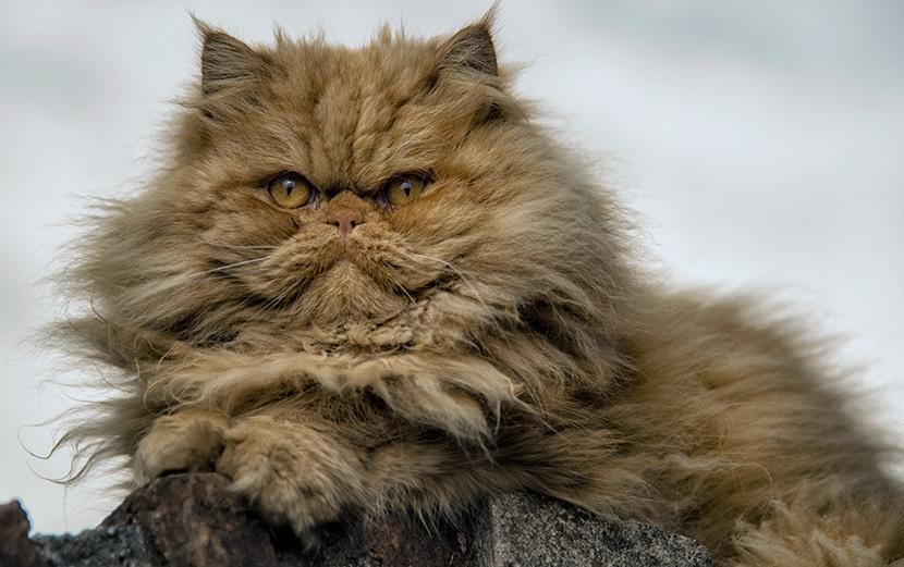 Welcher Katzentyp verbraucht wieviel Strom?