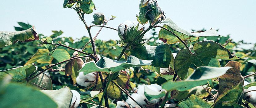 Nachhaltige Mode Baumwolle