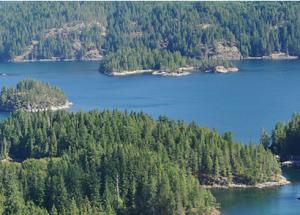 CO<sub>2</sub> in kanadischen Wäldern