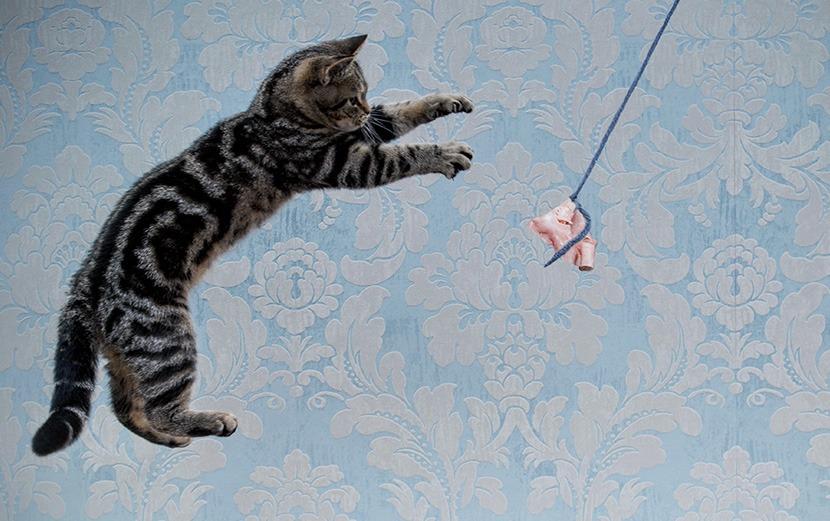 Welcher Katzentyp verbraucht wieviel Energie