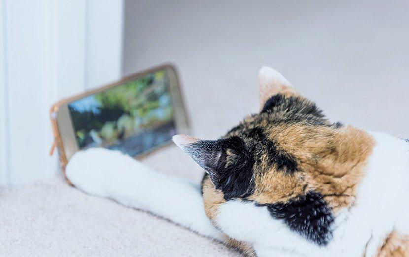 Katzentypen: Welche Katze verbraucht wieviel Energie?